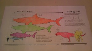How Big Is It? Shark Scale Project