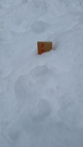 That is a yardstick - and I didn't push it all the way down through the snow.